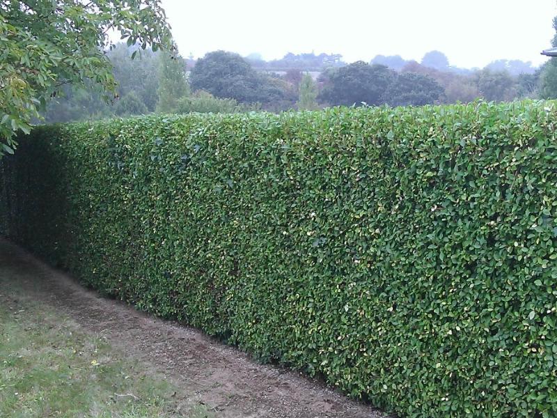 jardinage11