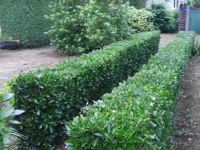jardinage2
