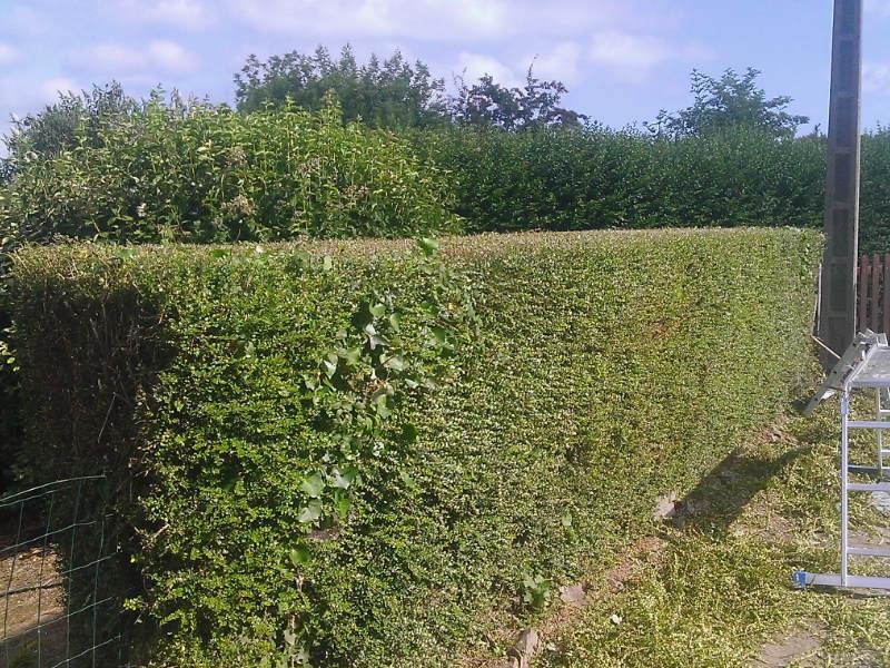 jardinage4